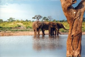 Elephants in Hwange National Park, Zimbabwe