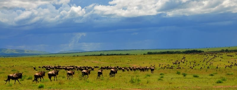 Great Wildebeest Migration