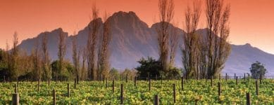 South Africa Wine Route