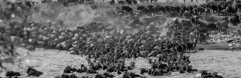 Masai Mara Migration Photo Safari