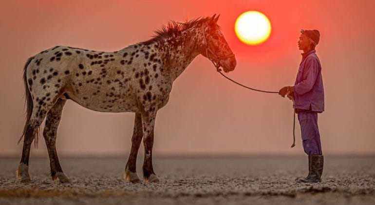 Horse with Groom