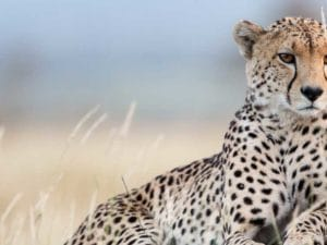 Lewa Wilderness Special Offer