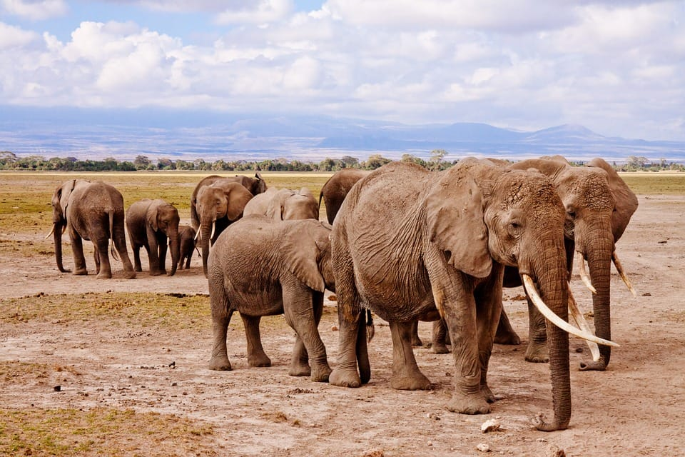 Amboseli National Park - In easy safari destination from India