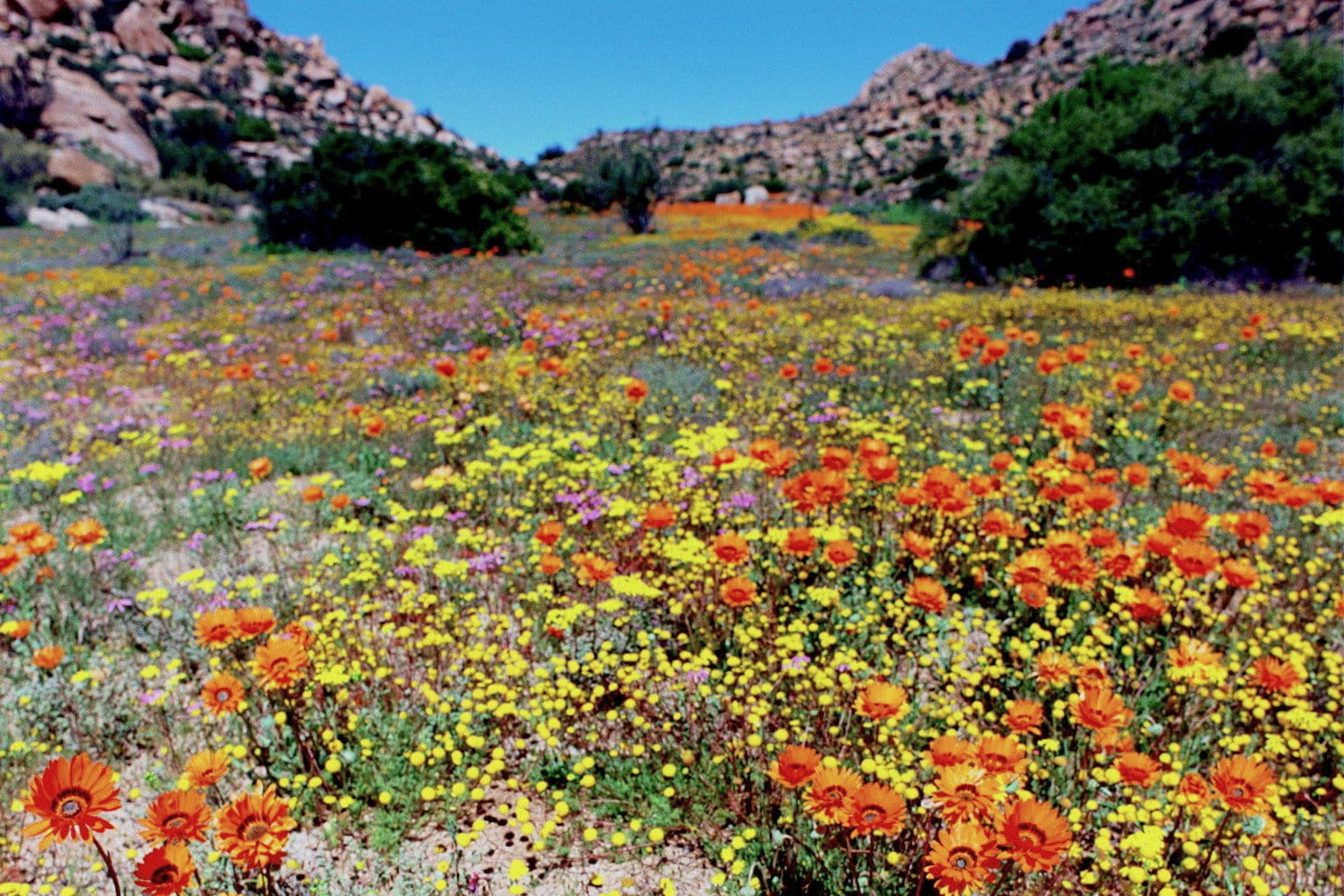 Spring in Namaqualand.