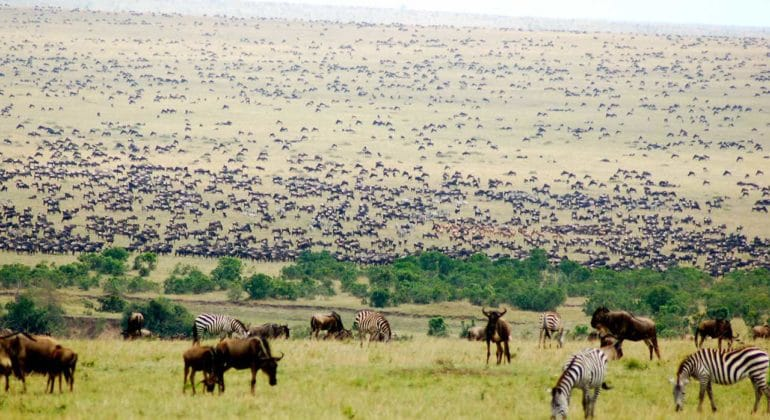 Offbeat Mara Migration
