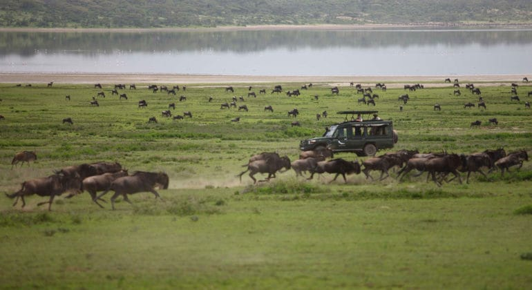 Tanzania Great Migration