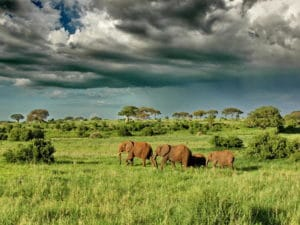 Olivers Camp Elephants Under Dramatic Clouds
