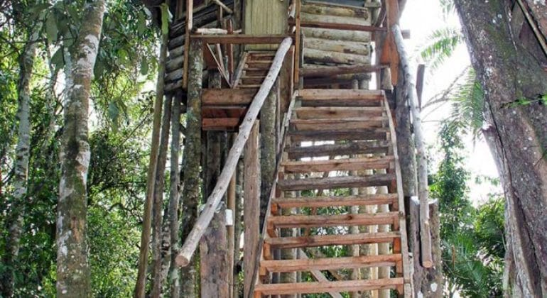 Primate Lodge Treehouse