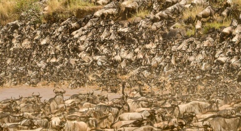 Great Migration 2021